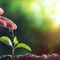 Frente al COVID-19: Seguridad Nacional Agroalimentaria