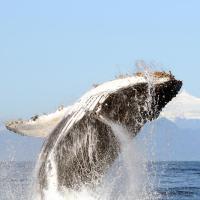 ODS 14: Vida Submarina |México COVID-19