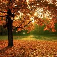 "Poema II. ""Август"" Agosto: Elena Albul |Navegantes Literarios"